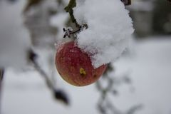 Apple με το χιόνι Στοκ Φωτογραφίες