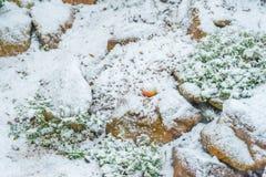 Apple πεσμένος στο χιόνι σε ένα rockery Στοκ Φωτογραφία