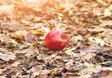 Apple που βρίσκεται στο έδαφος Στοκ Εικόνες