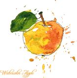 Apple που σύρει από το watercolor Στοκ Εικόνες