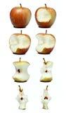 Apple που τρώει τα στάδια Στοκ Φωτογραφία