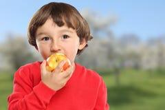 Apple που τρώει τα φρούτα παιδιών παιδιών υγιή Στοκ Εικόνα