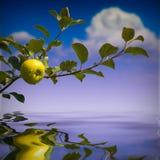 Apple σε έναν κλάδο Στοκ Φωτογραφία