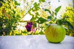 Apple σε έναν πίνακα στον κήπο, συγκομιδή, υπόβαθρο φύσης Στοκ εικόνες με δικαίωμα ελεύθερης χρήσης