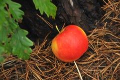 Apple σε ένα δάσος Στοκ φωτογραφία με δικαίωμα ελεύθερης χρήσης