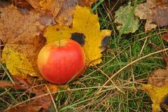 Apple σε ένα δάσος Στοκ εικόνα με δικαίωμα ελεύθερης χρήσης