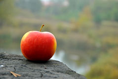 Apple σε ένα δάσος Στοκ εικόνες με δικαίωμα ελεύθερης χρήσης