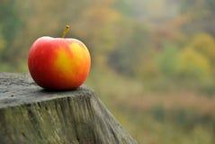 Apple σε ένα δάσος Στοκ Εικόνες