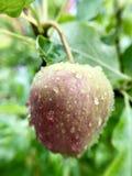 Apple σε ένα δέντρο Στοκ Φωτογραφίες