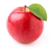 Apple στην κινηματογράφηση σε πρώτο πλάνο Στοκ Εικόνες
