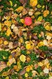 Apple στη χλόη και τα ξηρά φύλλα Στοκ φωτογραφία με δικαίωμα ελεύθερης χρήσης
