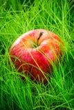 Apple στη χλόη Στοκ εικόνα με δικαίωμα ελεύθερης χρήσης