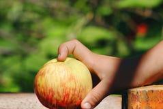 Apple στον κήπο Καλοκαίρι Στοκ Φωτογραφίες