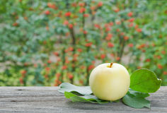 Apple στον κήπο Στοκ Φωτογραφίες