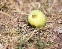 Apple στο έδαφος στη φύση Στοκ Φωτογραφία