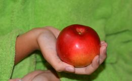 Apple στο κορίτσι χεριών Στοκ Εικόνα