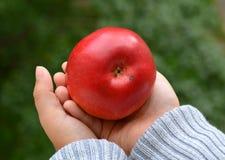 Apple στο παιδί χεριών Στοκ Εικόνες