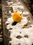 Apple στο πρώτος χιόνι Οκτωβρίου Στοκ Εικόνες