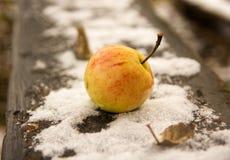 Apple στο πρώτος χιόνι Οκτωβρίου Στοκ Φωτογραφία