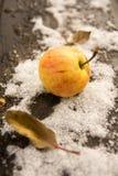 Apple στο πρώτος χιόνι Οκτωβρίου Στοκ εικόνες με δικαίωμα ελεύθερης χρήσης