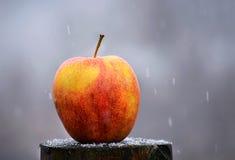 Apple στο χιόνι Στοκ φωτογραφία με δικαίωμα ελεύθερης χρήσης