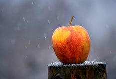 Apple στο χιόνι Στοκ εικόνα με δικαίωμα ελεύθερης χρήσης