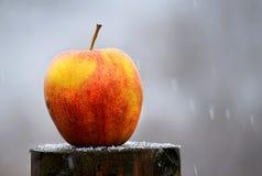 Apple στο χιόνι Στοκ Εικόνα