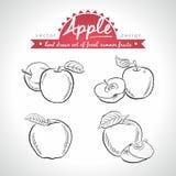 Apple Σύνολο νωπών καρπών, σύνολο, μισός και δαγκωμένος με το φύλλο επίσης corel σύρετε το διάνυσμα απεικόνισης η ανασκόπηση απομ ελεύθερη απεικόνιση δικαιώματος