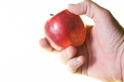 Apple υπό εξέταση στο άσπρο υπόβαθρο Στοκ Εικόνα