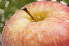 Apple φρέσκια με το αφηρημένο υπόβαθρο θαμπάδων φύσης bokeh Στοκ Φωτογραφία