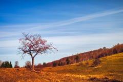 Apple χωρίς φύλλα με τα κόκκινα μήλα στο τοπίο φθινοπώρου στοκ εικόνα με δικαίωμα ελεύθερης χρήσης