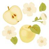 Apple Комплект элементов Кусок Яблока Цветок Белая предпосылка Стоковая Фотография