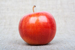 Apple на холстине Стоковые Фотографии RF