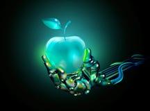 Apple Стеклянное яблоко в руке Иллюстрация штока