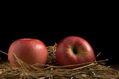 Apple сторновка На древесине Черная предпосылка Стоковые Изображения RF