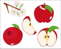 Apple Стоковые Фотографии RF