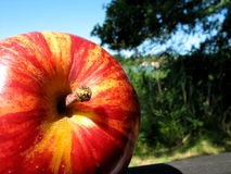 Apple. A part of nature Stock Images