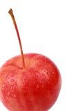 Apple. Crabapple isolated on the white background.autumn 2009 Royalty Free Stock Images
