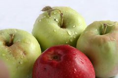 Apple. S, red , yellow Royalty Free Stock Images