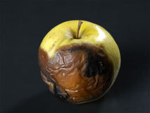 Apple. A rotten  apple on a black background Stock Photo