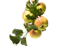 Apple. Royalty Free Stock Photo
