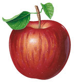 Apple illustration libre de droits