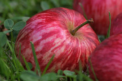 Apple. Interesting colored apple on grass Royalty Free Stock Photo