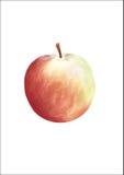 Apple vektor abbildung