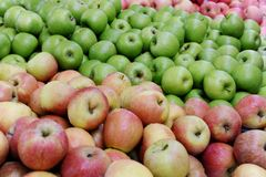 Apple. Colour full apple varieties at a fruit farm Royalty Free Stock Images