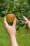 Apple 21 Fotografia Stock