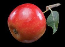 Apple. Red apple on black background Stock Photography