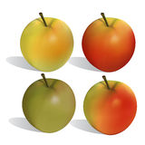 Apple. A ripeness four variant Stock Photography