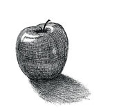 Apple. Drawing on white background Royalty Free Stock Photos