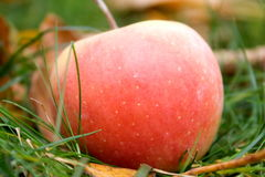 Apple. Fresh apples on the green grass Royalty Free Stock Images